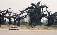 Trees in Beijing amusement park