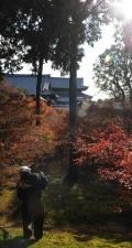 Tofukuji temple cleaning, Kyoto