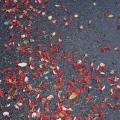 Tokyo-red flower petals